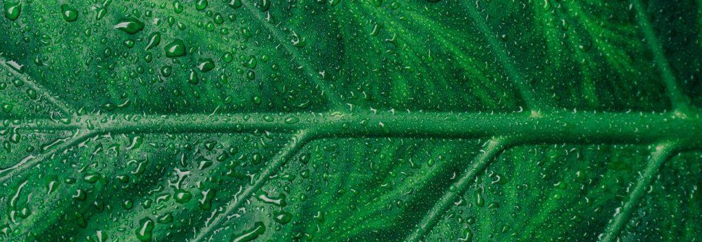groene producten