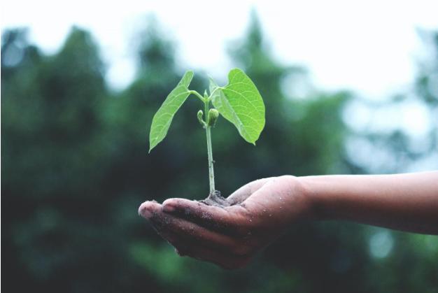 Bomen planten met app TreeClicks